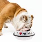 Miska na jedlo pre psíka