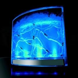 Antquarium - akvárium pre mravcov s LED podsvietením